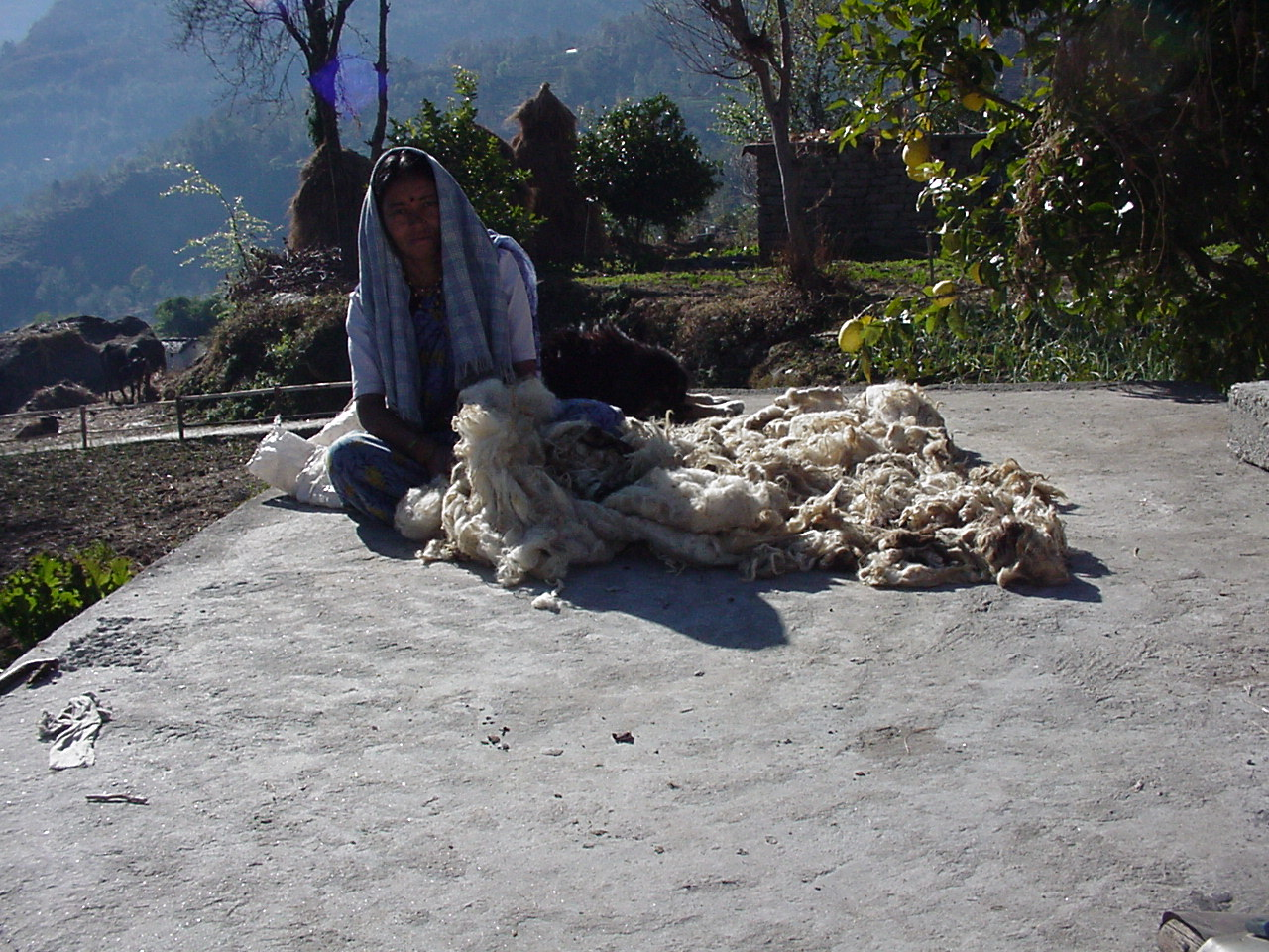 woman with raw wool in DHORTI
